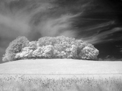 Baumgruppe auf Hiddensee