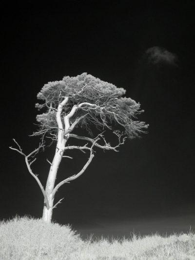 Windflüchter (III)