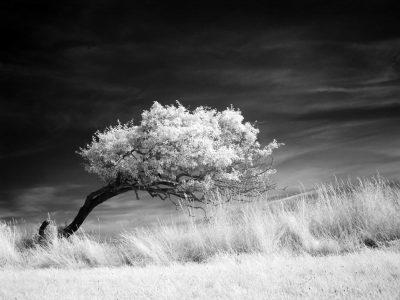 Windflüchter (VIII)